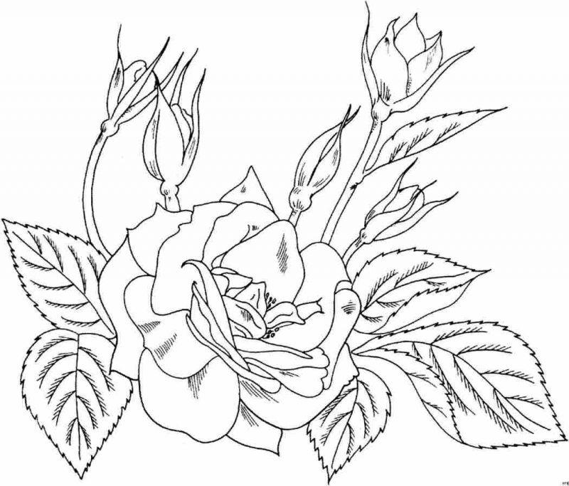 imágenes de amor con rosas para dibujar