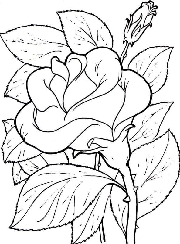 imágenes de amor para dibujar para mi novia